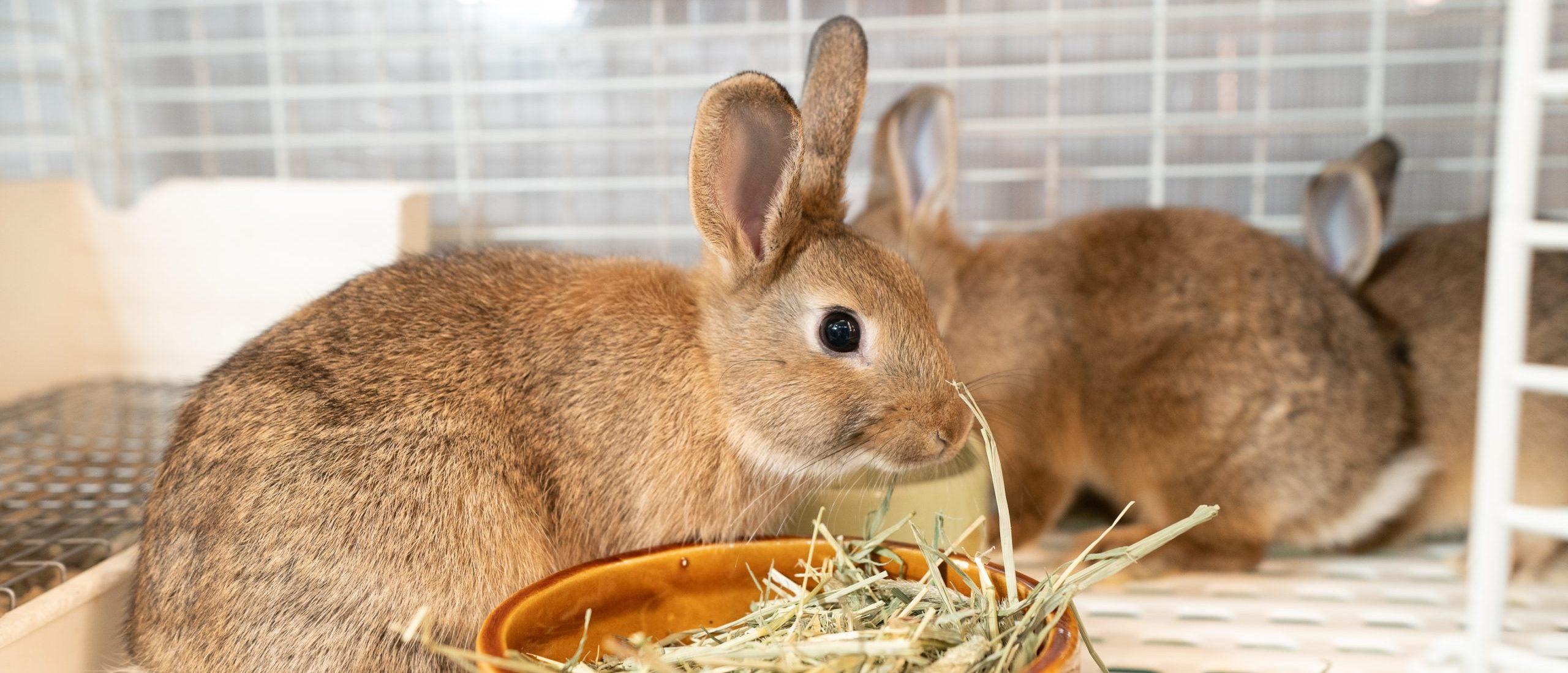 うさぎの診療|青森県八戸市やすだ動物病院