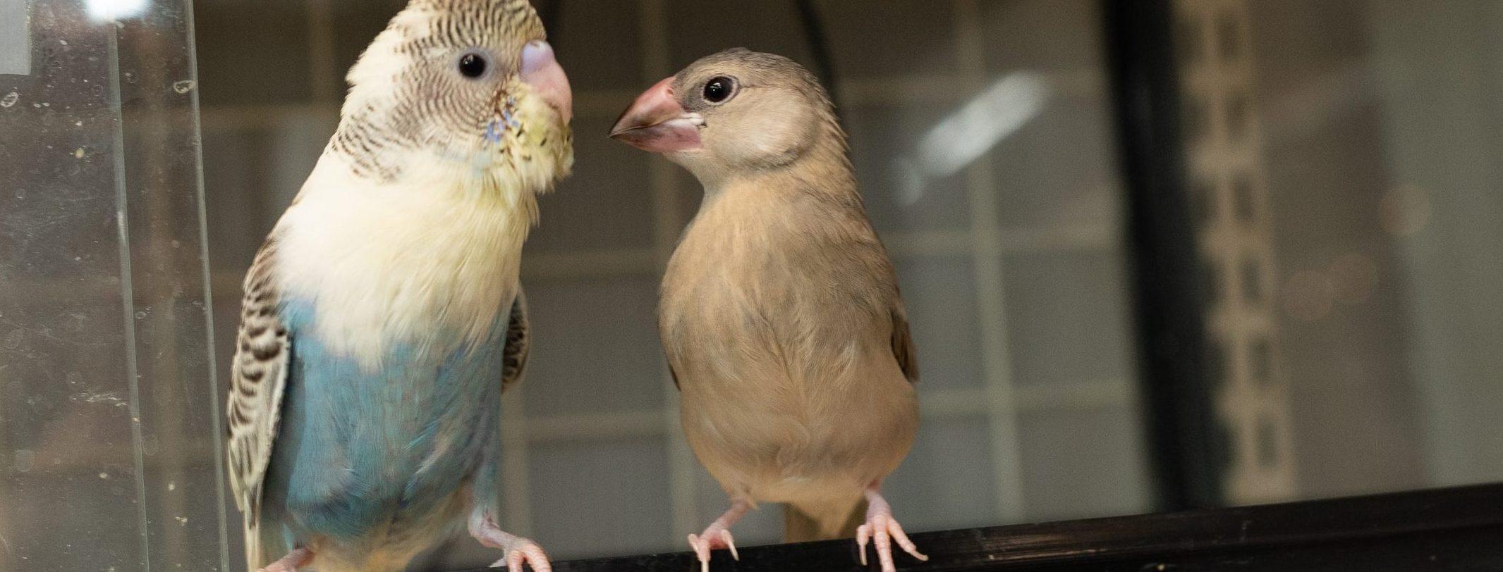 鳥の診療|青森県八戸市やすだ動物病院