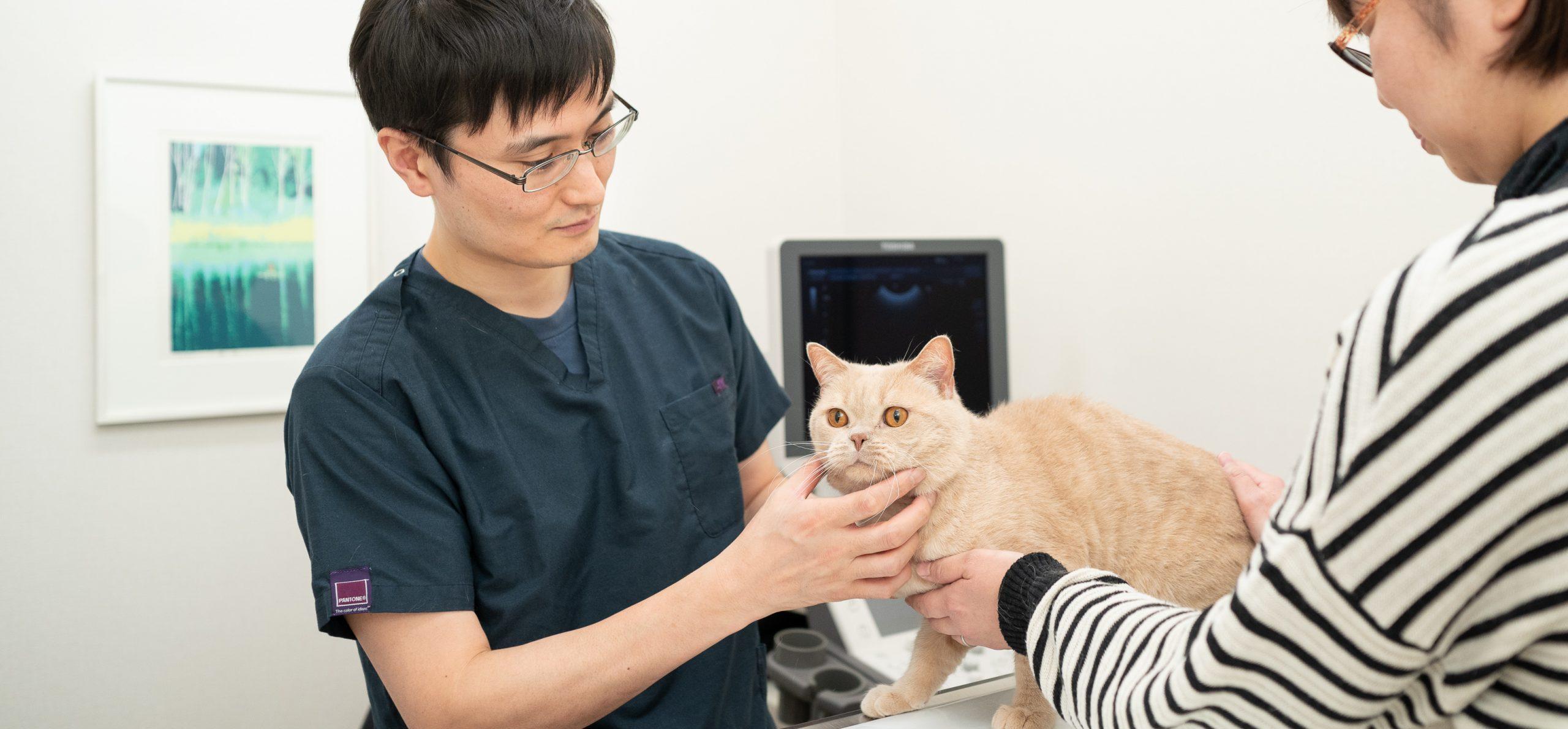 犬と猫の内科|八戸市で動物病院をお探しの方は、やすだ動物病院へ