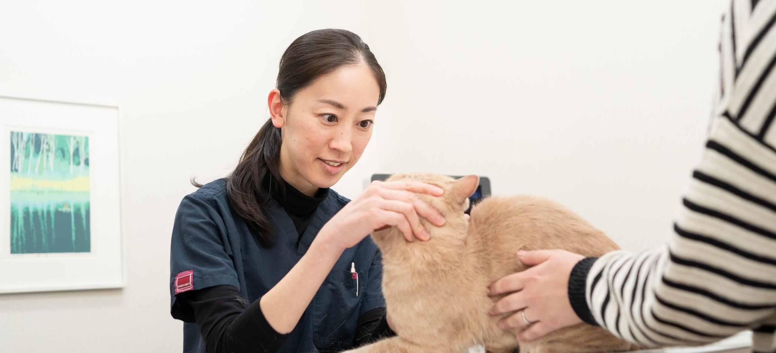 犬と猫の皮膚科|八戸市のやすだ動物病院
