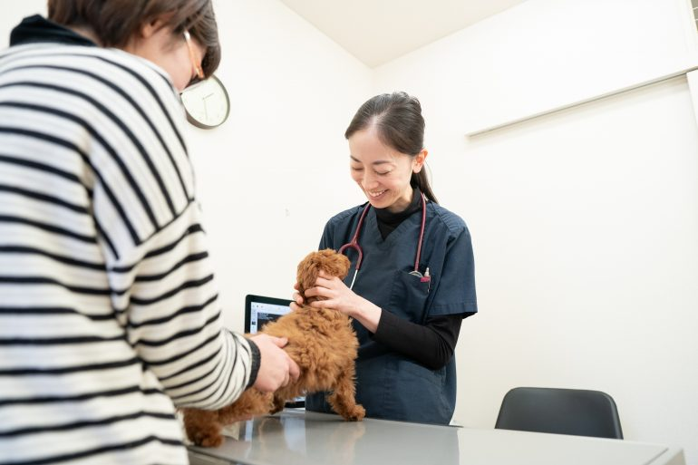 問診|青森県八戸市やすだ動物病院