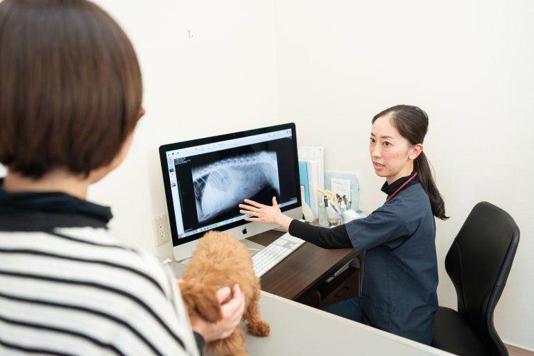 検査・治療|青森県八戸市やすだ動物病院