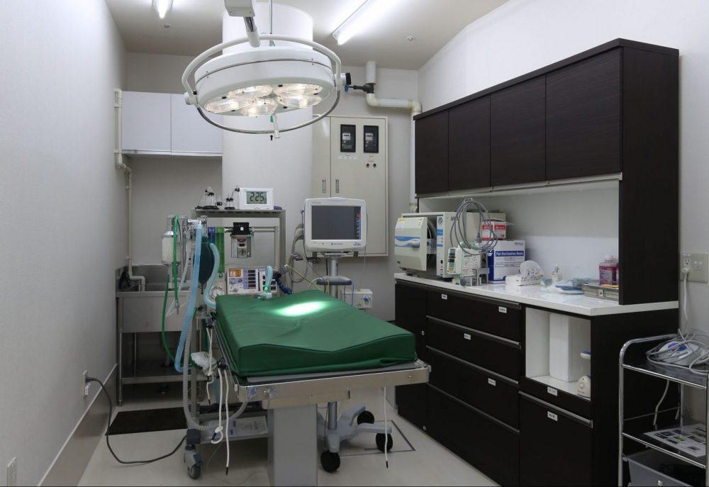 やすだ動物病院|八戸市の動物病院